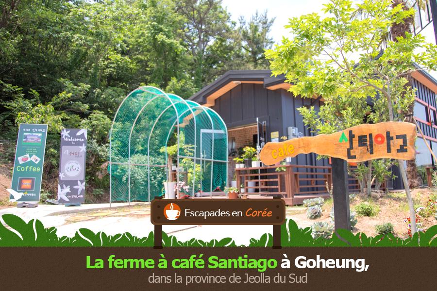 #15. La ferme à café Santiago à Goheung, dans la province de Jeolla du Sud