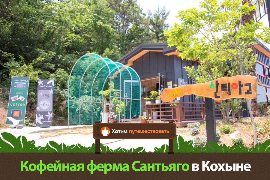 #15. Кофейная ферма Сантьяго в Кохыне