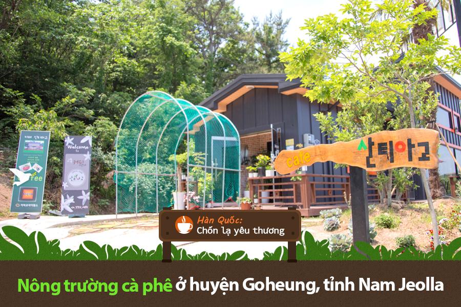 #15. Nông trường cà phê ở huyện Goheung, tỉnh Nam Jeolla