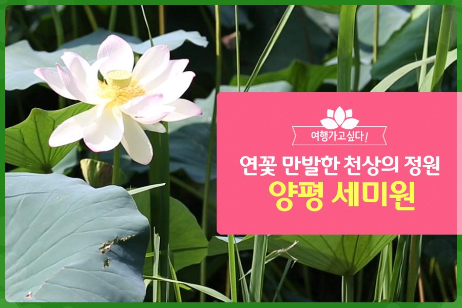 #25. 연꽃 만발한 천상의 정원 '양평 세미원'