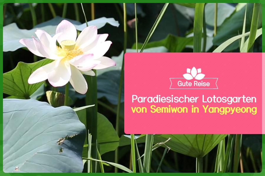 #25. Paradiesischer Lotosgarten von Semiwon in Yangpyeong