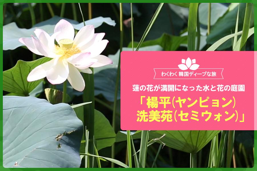 #25. 蓮の花が満開になった水と花の庭園「 楊平( ヤンピョン)洗美苑(セミウォン)」