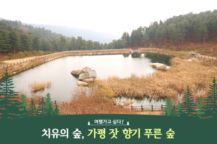 #39. 치유의 숲, 가평 잣 향기 푸른 숲
