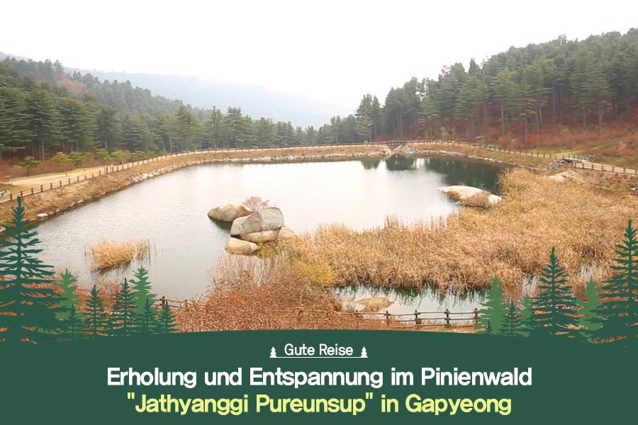 """#39. Erholung und Entspannung im Pinienwald """"Jathyanggi Pureunsup"""" in Gapyeong"""