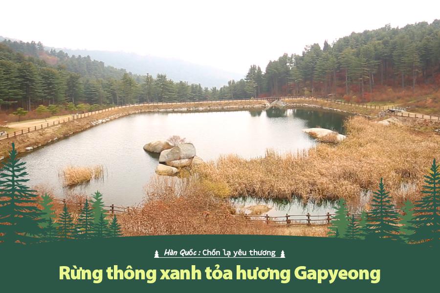 #39. Rừng thông xanh tỏa hương Gapyeong