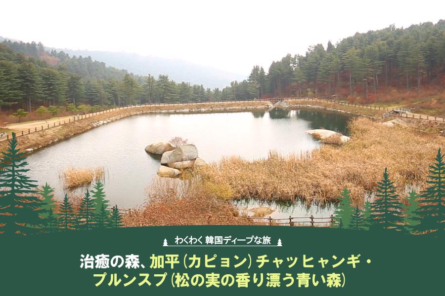 #39. 治癒の森、加平(カピョン)チャッヒャンギ・プルンスプ(松の実の香り漂う青い森)