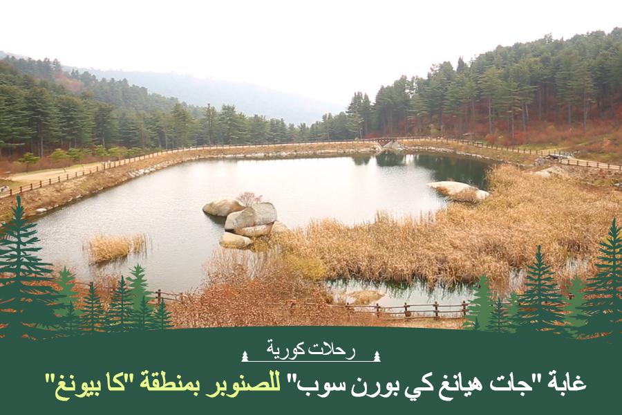 """#39. غابة """"جات هيانغ كي بورن سوب"""" للصنوبر بمنطقة """"كا بيونغ"""""""