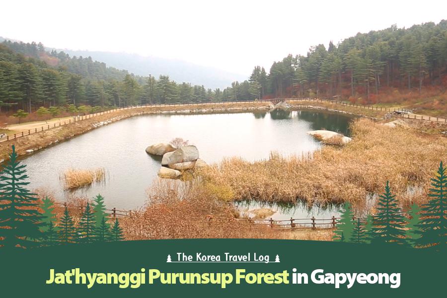 #39. Jat'hyanggi Purunsup Forest in Gapyeong