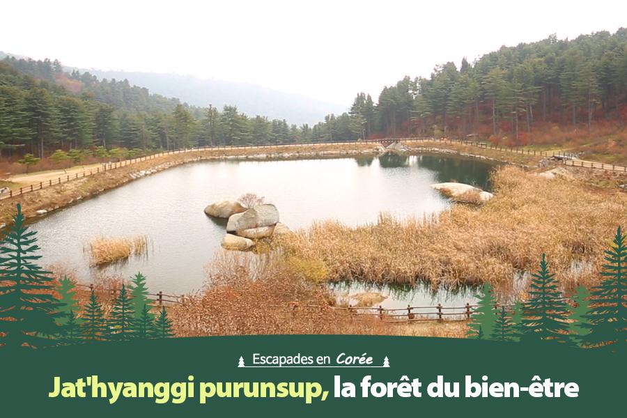 #39. Jat'hyanggi purunsup, la forêt du bien-être