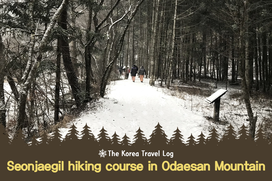 #43. Seonjaegil hiking course in Odaesan Mountain