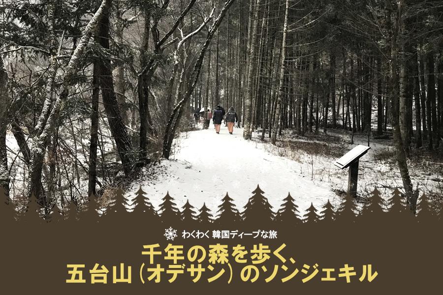 #43. 千年の森を歩く、五台山(オデサン)のソンジェキル