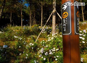 Jalur pejalan kaki Dulle-gil Seoul